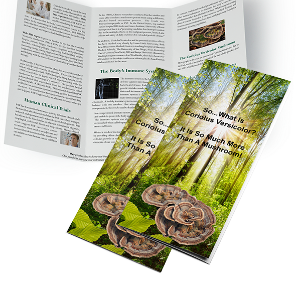 Brochures & Flyers